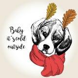 Vector портрет бигля в ушах шарфа и лист Нарисованная рукой иллюстрация собаки Младенец оно холод s снаружи Стоковое Изображение RF
