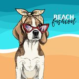 Vector портрет солнечных очков собаки бигля нося, ретро bandana Иллюстрация моды лета Каникулы, море, пляж Стоковые Изображения RF