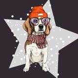 Vector портрет beanie, стекел и шарфа собаки бигля нося Изолированный на звезде и снеге Illustraion цвета Skecthed Стоковые Фото