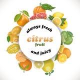 Vector предпосылка с цитрусовыми фруктами в круге и словах Стоковая Фотография RF