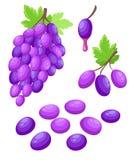 Vector пук иллюстрации виноградины виноградин вина с значком цвета лист плоским для apps и вебсайтов еды иллюстрация штока