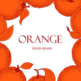 Vector рамка нарисованная рукой с апельсинами в стиле эскиза сбор винограда милой иллюстрации птиц установленный Стоковые Изображения RF