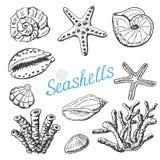 Vector собрание изолированных раковин, коралла и морских звёзд моря Иллюстрация чертежа руки Стоковое Фото