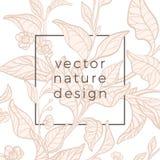 Vector шаблон ветви куста чая, лист бесплатная иллюстрация