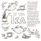 Vector эскиз деталей для церемонии чая Чайник и чашки, лимон Имена различными шрифт нарисованный разнообразиями Стоковое Изображение RF