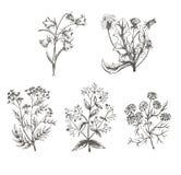 Vector эскиз иллюстрации полевых культур на белой предпосылке Стоковые Изображения