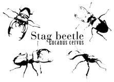 Vector 1 van het insect royalty-vrije illustratie