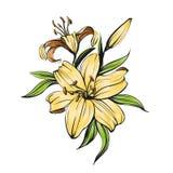 Флористические зацветая лилии vector акварель иллюстрации нарисованная рукой покрашенная Стоковая Фотография RF