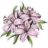 Флористические зацветая лилии vector акварель иллюстрации нарисованная рукой покрашенная Стоковая Фотография