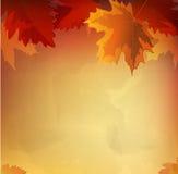 Vector abstract  autumn background Stock Photos