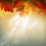 Vector abstract  autumn background Royalty Free Stock Images