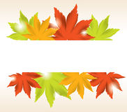 vector abstract background of maple leaves Stock Image