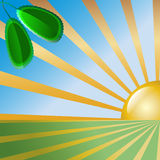 Vector abstract background with rising sun. And green leaves Royalty Free Stock Photos