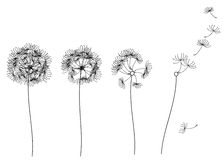 Vector abstract dandelions. Stock Photos