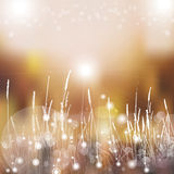 Vector abstract defocused bokeh lights nature spring summer background. Stylish hipster blurry background with bokeh effect for ho Royalty Free Stock Photo