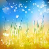 Vector abstract defocused bokeh lights nature spring summer background. Stylish hipster blurry background with bokeh effect for ho Stock Photography