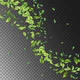 Green Flying Leaves. Vector abstract foliage background. Green flying Leaves Royalty Free Stock Photography