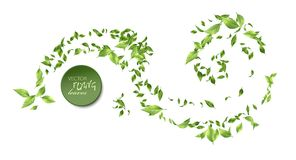Green Flying Leaves. Vector abstract foliage background. Green flying Leaves on white background royalty free illustration