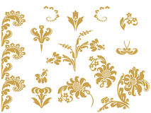 Vector abstract gold set flowers elements design  Stock Photos