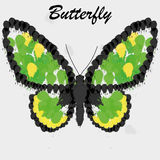 Vector Abstract Green And Yellow Butterfly Background Stock Image