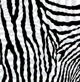 Vector abstract skin texture of zebra Stock Photography