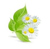 Vector achtergrond met madeliefjes en groene bladeren Royalty-vrije Stock Afbeeldingen
