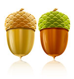 Vector acorn nuts Royalty Free Stock Photo