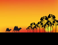 Vector africa sunset Royalty Free Stock Photo