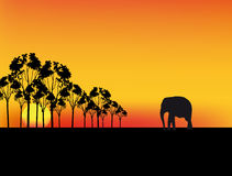 Vector africa sunset Royalty Free Stock Images