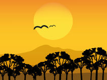 Vector Africa sunset Royalty Free Stock Photos
