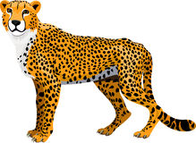 Vector african cheetah isolated Royalty Free Stock Photography