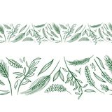 Vector Agriculture Seamless Borders. Farming green wheat and rye spike repeating design elements Royalty Free Stock Images