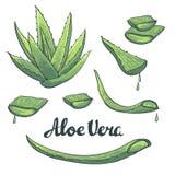 Vector Aloe vera hand drawn set. Royalty Free Stock Photos