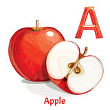 Vector alphabet letter A. Apple. Vector alphabet letter A for children education with cartoon apple. Isolated. Learn to read Royalty Free Stock Photos