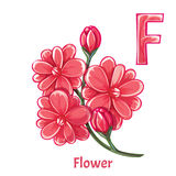 Vector alphabet letter F. Flower. Vector alphabet letter F for children education with pink flower. Isolated. Learn to read Stock Image