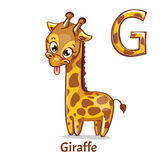 Vector alphabet letter G. Giraffe. Vector alphabet letter G for children education with funny cartoon giraffe. Isolated. Learn to read Stock Photos