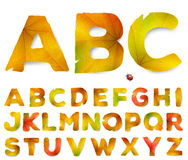 Vector alphabet letters made from autumn leaves. On white Royalty Free Stock Images
