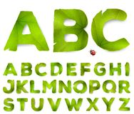 Vector alphabet letters made from green leaves. Isolated on white vector illustration
