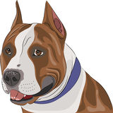 Vector american staffordshire terrier Stock Image