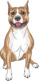 Vector. American Staffordshire Terrier. Stock Photos