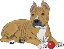 Vector american staffordshire terrier Stock Photography