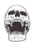 Vector anatómico del cráneo libre illustration