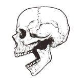 Vector anatómico del cráneo ilustración del vector