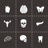 Vector anatomy icons set Royalty Free Stock Image