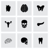 Vector anatomy icons set Stock Image
