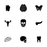 Vector anatomy icons set Stock Images