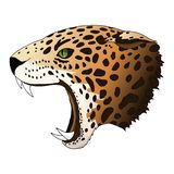 Vector angry leopard portrait. Jaguar predator head colorful isolated royalty free illustration