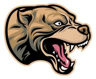 Angry pitbull head. Vector of Angry pitbull head, suitable for your sport team Stock Photos