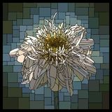 Vector stained glass window with blooming terry camomile. stock illustration