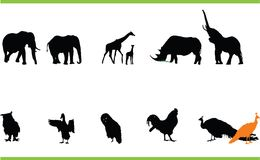 Vector animals collection royalty free stock images